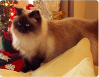 My cat, Sophie